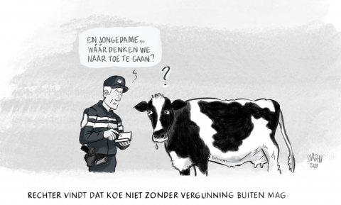 Een Limburgse koe hoort standaard op stal