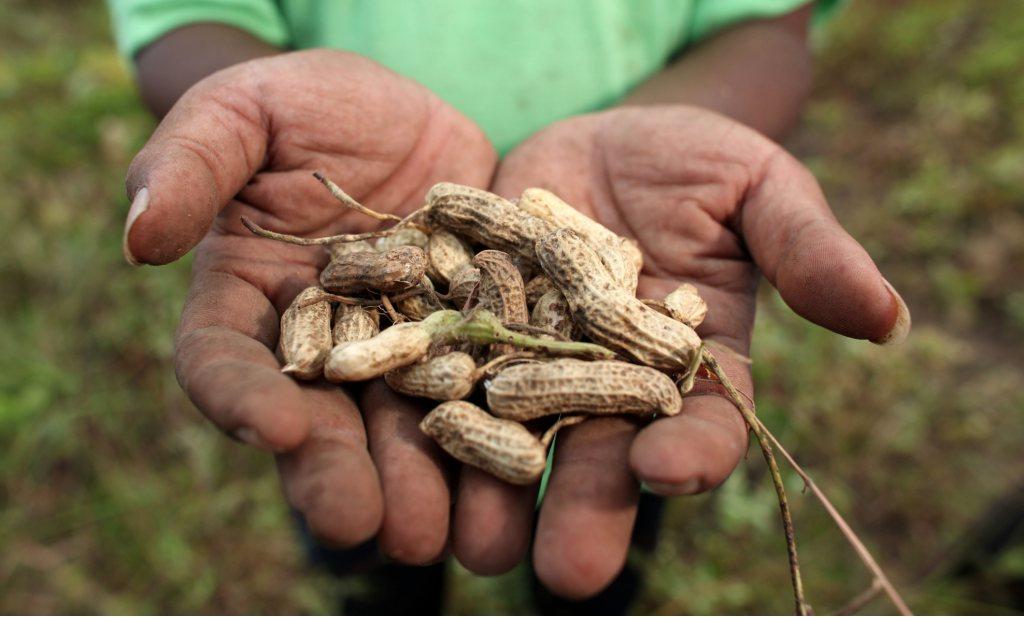 Voedselzekerheid in verkeerde handen bij vrije markt