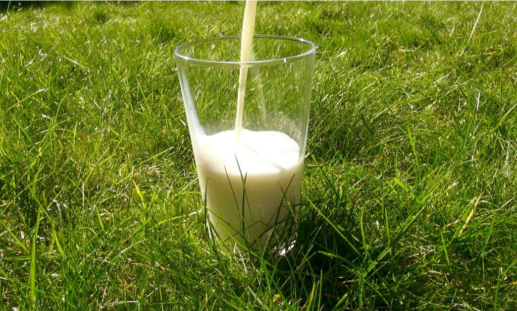 Biologisch vlees en biologische melk voedzamer