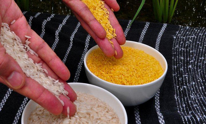 Golden Rice voldoet niet aan eisen voor gezondheidsclaim