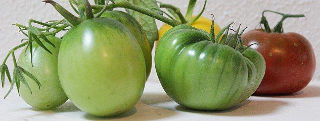 Groene tomaten - I