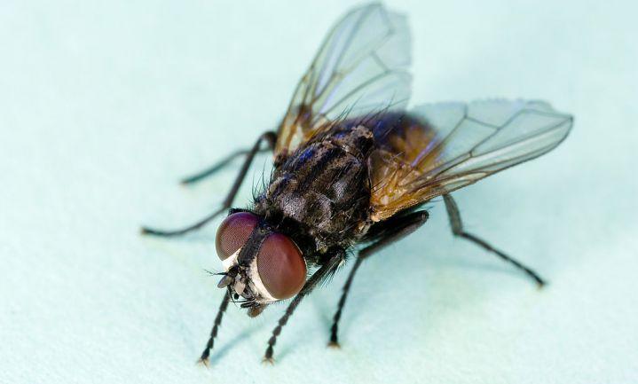 Zoetstof Truvia toch niet geschikt als insecticide