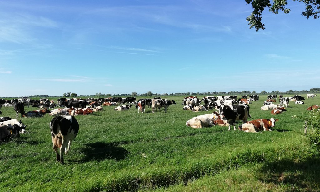 Stikstofmaatregel helpt niet tegen uitstoot én verhoogt kostprijs melk in een verslechterende markt