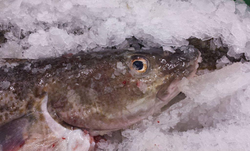 Vishandelaar weet net zo weinig van vis als de klant en de redactie van deze krant