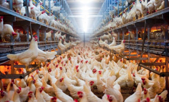 Vogelgriepvirus H5N8 overgesprongen op mens in Rusland