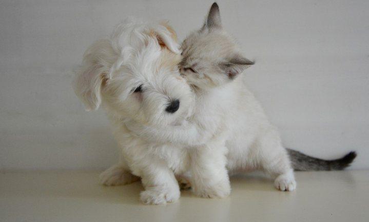 Honden houden van vet, katten van carbs