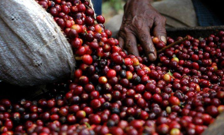 Van afval tot voedzame koffiebloem