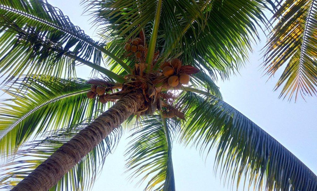 Eieren wel, kokosvet niet