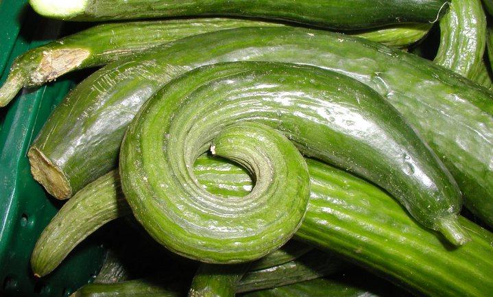 Droogte hindert groente in de groei en laat komkommers krom trekken