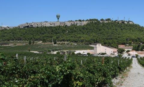 Gezuiverd rioolwater voor Zuid-Franse wijn helpt besparen op mestkosten
