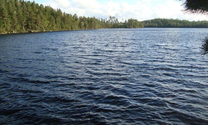 Troebeler water hindert vissen niet