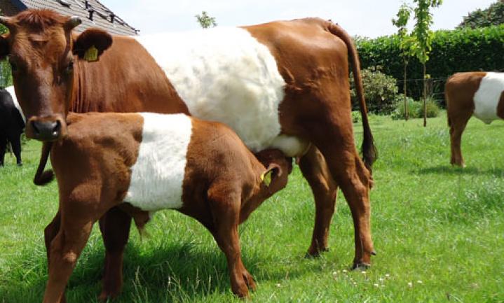 Subsidiesteuntje in de rug voor Stichting Zeldzame Huisdierrassen