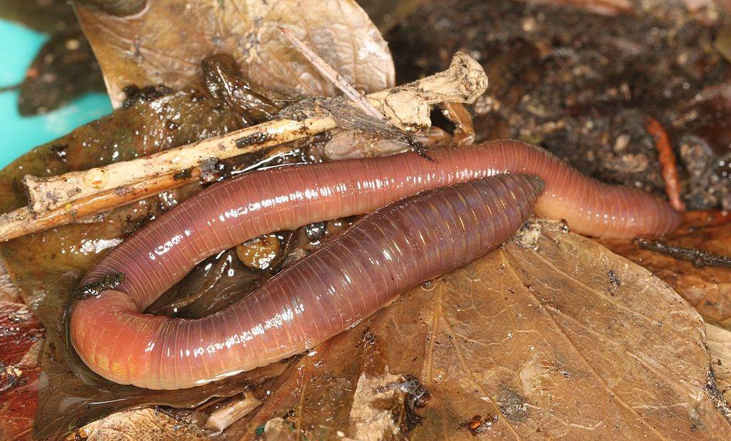 Kletskassa's, gezonde voorbeeldschool wacht op geld en klimaat bepaalt waar wormen wonen