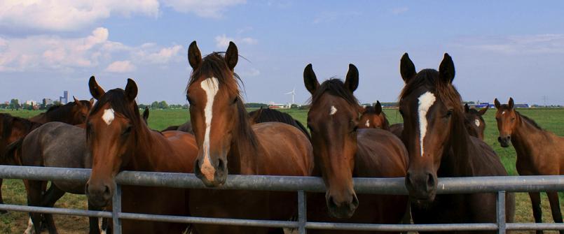 Ook fraude met Nederlands paard: inval in Oss