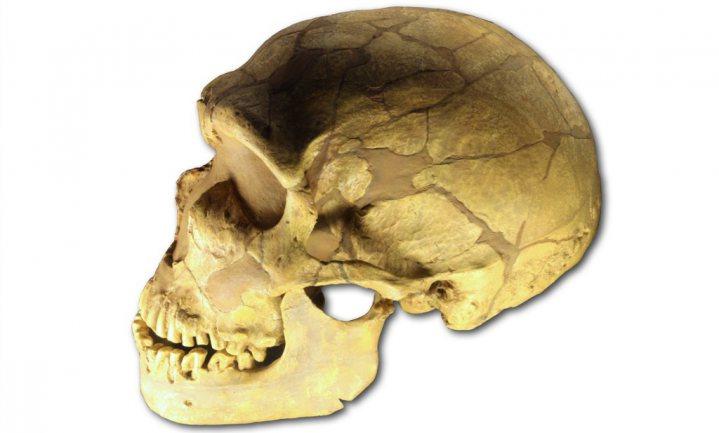 Neanderthalers aten meer groenten dan gedacht