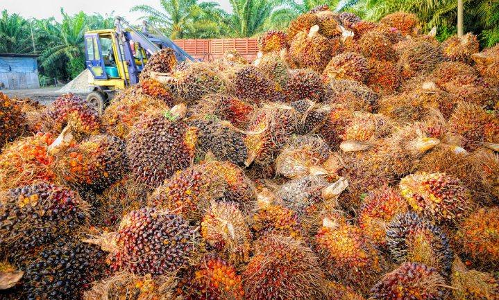 Frans parlement wil snel eind aan palmolie als fiscaal voordelige brandstof