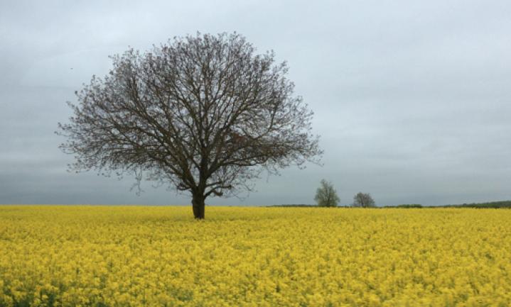 De vrek en de boom