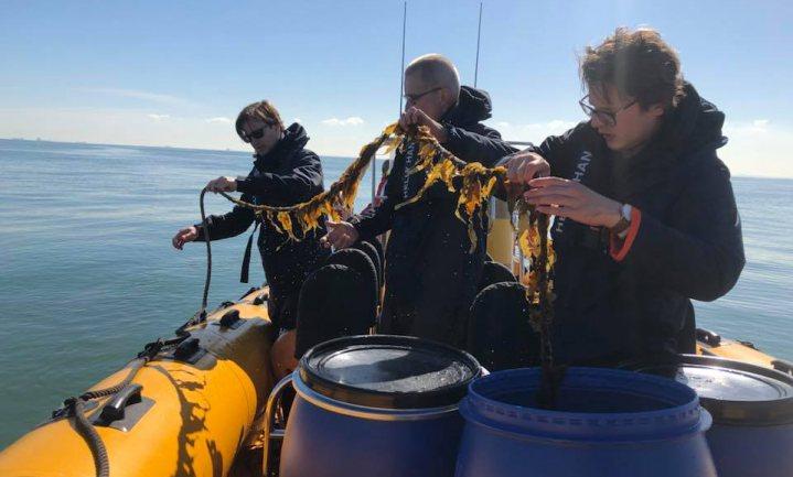 Na zeewier uit Zeeland eten we straks ook Noordzee-pesto