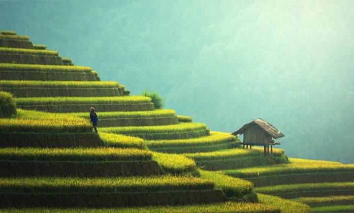 'Intensieve landbouw minst slecht voor milieu'