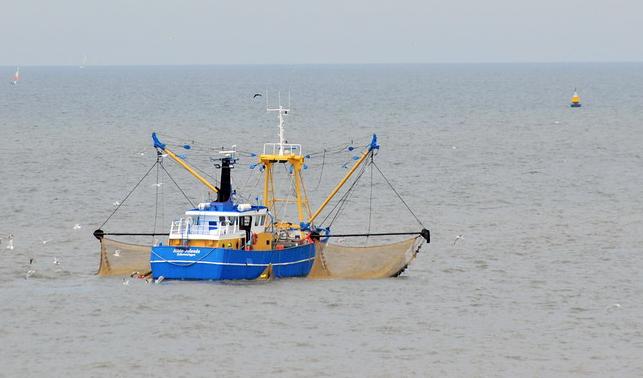 Overheid bezorgd: vissers vissen de zee niet leeg