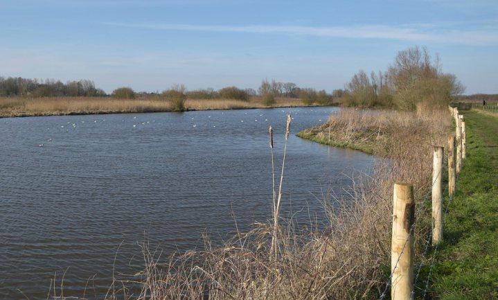 Schelde 'krioelt weer van de vis'