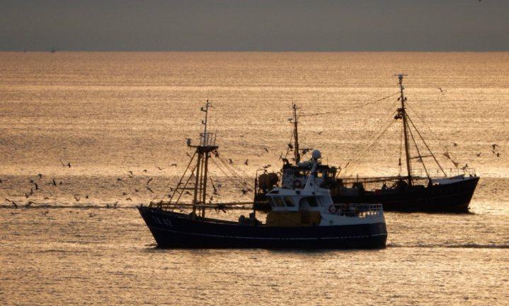 Veel minder tong en haring voor Nederlanders vissers in 2019