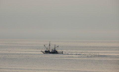 Is de visserij verrot?