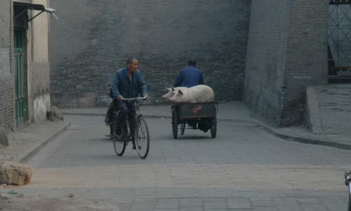Chinees varken bijna tweemaal zoveel waard als Hollands