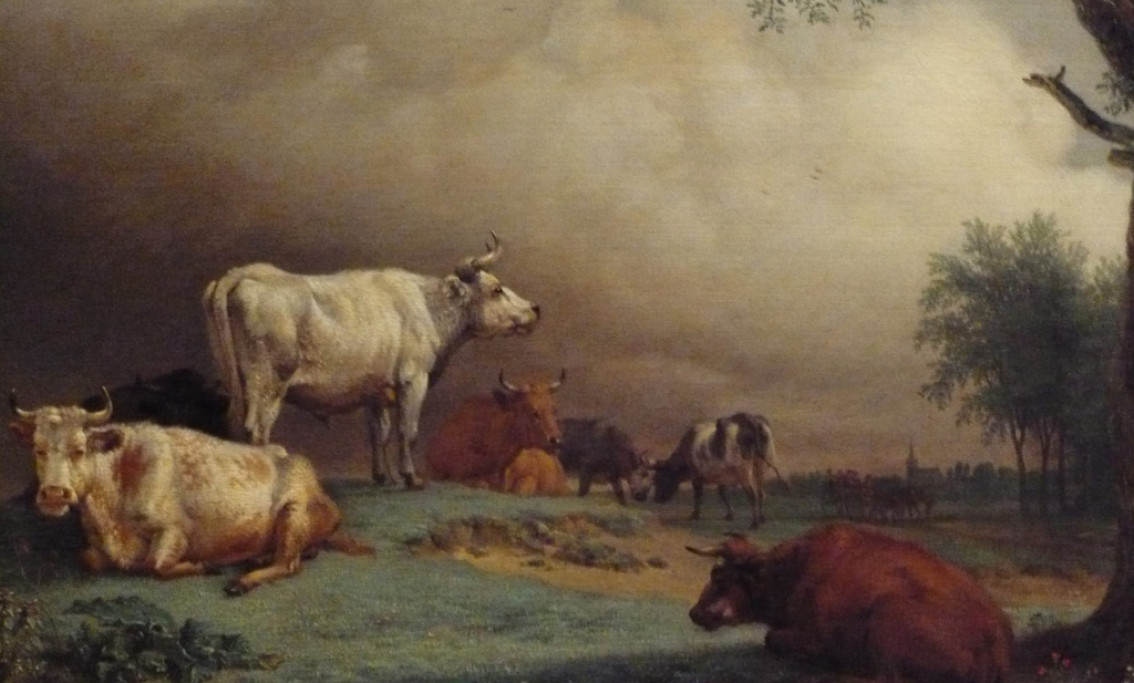 'Koe op stal heeft het prima'