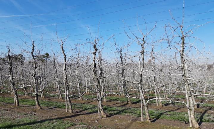 17% van in België verkochte gewasbeschermingsmiddelen is 'natuurlijk'