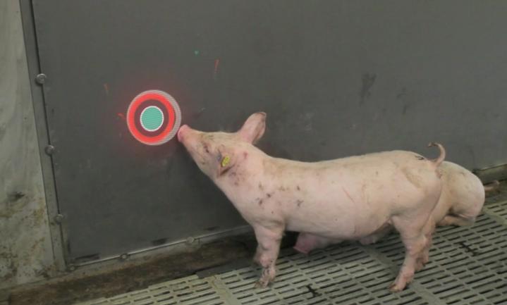 Varkens kunnen gamen - duh