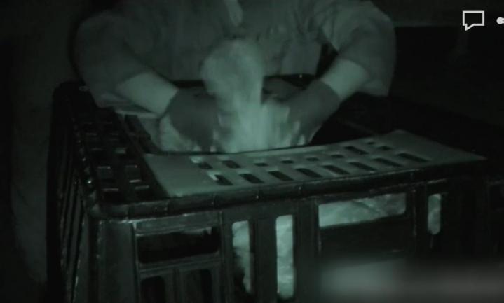 Kip-bij-de-potenpakkers strafbaar, toch gaan boeren en vangbedrijven door