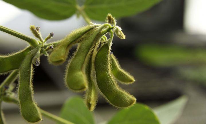'Green Deal Soja in Nederland' mikt op alternatieve eiwitproductie