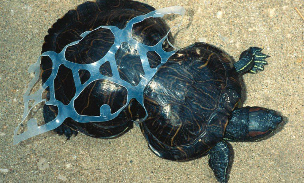 Bierbrouwerij maakt oceaanplastic minder schadelijk