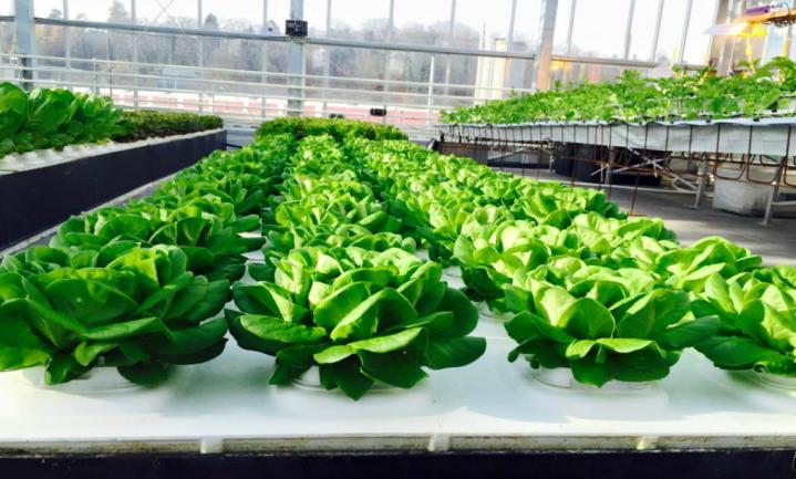 Grootste stadsboerderij Europa voedt 1% Den Haag