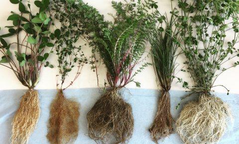 Humus is dood, leve de bodemorganische stof!