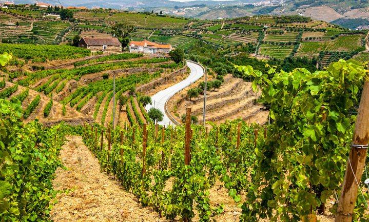 'Dit jaar meer Portugese wijn'