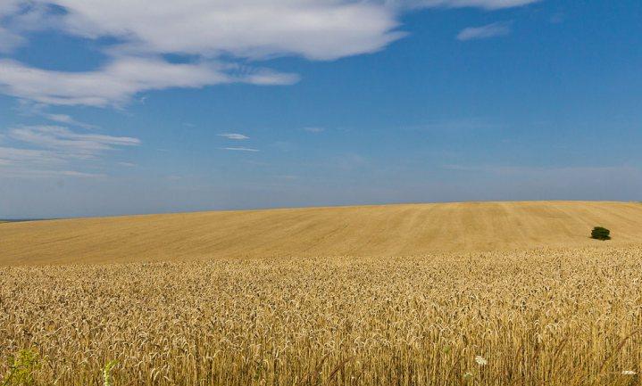 Landhervorming moet van Oekraïne het vruchtbare land maken dat de wereld voedt