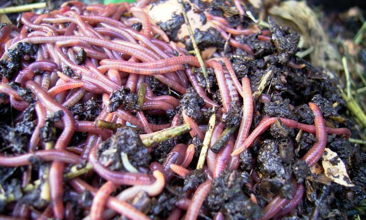 'Achteruitgang bodemdieren bedreigt levenscyclus aarde'