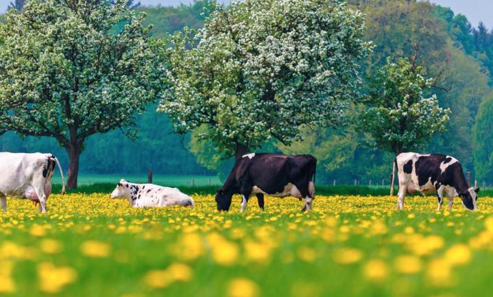 Intensiteit Nederlandse melkveehouderij ruim 20% toegenomen