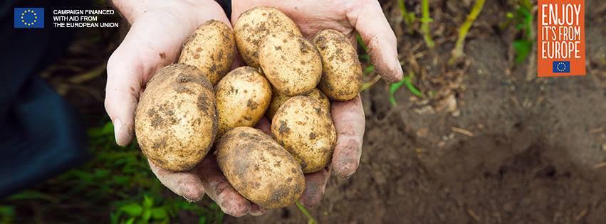 Het Aardappelcongres