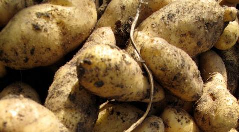 1.900.000.000 zakjes aardappelen wachten op een klant