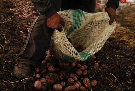 Aardappels rooien bij Bram Ladage: wie volgt?