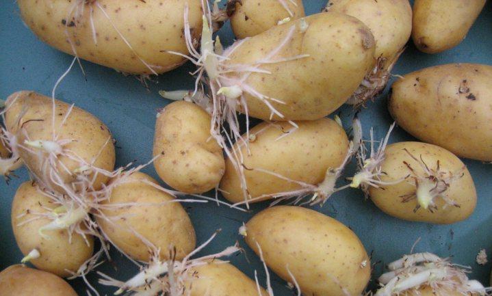 Zeven trucs om groente en fruit langer vers te houden