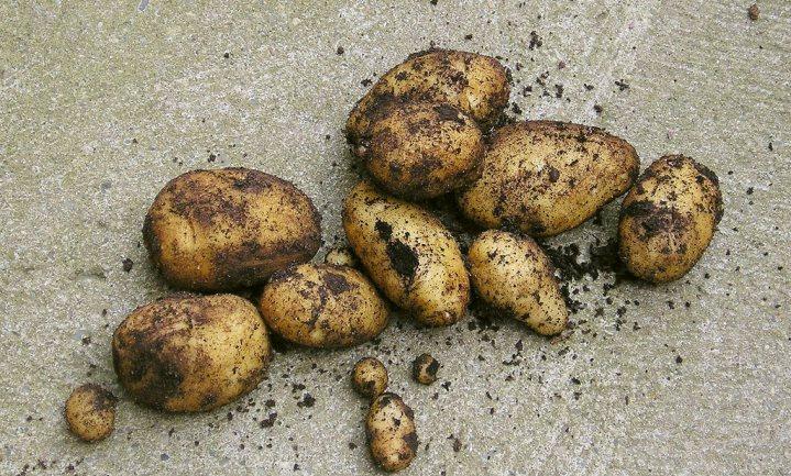 Belgen eten hun frietjes vooral buitenshuis