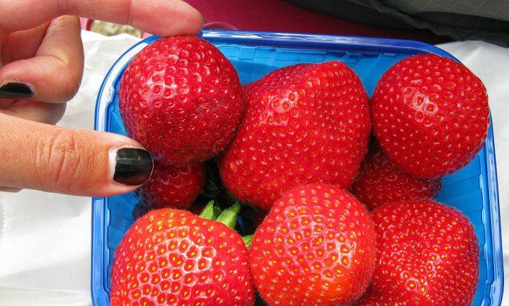 'Menselijke obesitas komt voort uit plantenobesitas'