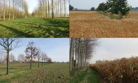Boeren en bomen - provinciale ondersteuning Agroforestry-initiatieven varieert