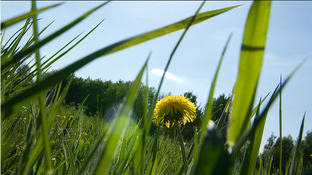 Milieubureau wil €225 mio landbouwsubsidies voor akkerranden