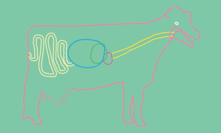 'All eyes on Milk' - Wereldmelkdag