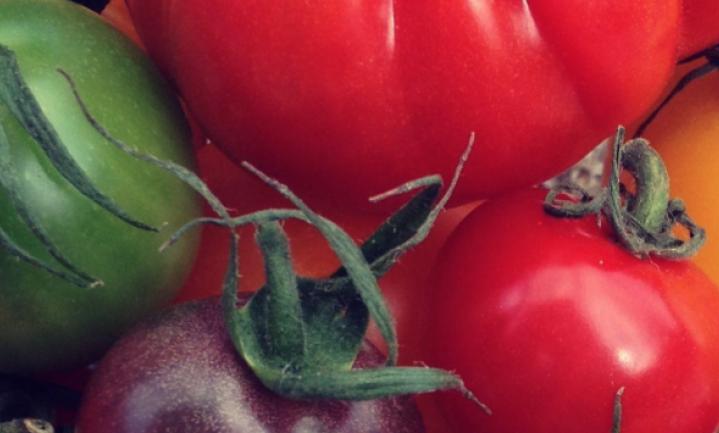 Wie teelt de beste rauwe tomaat van NL?